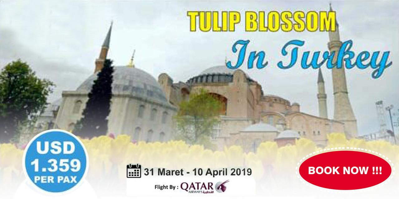TULIP BLOSSOM IN TURKEY