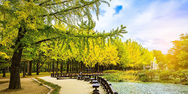 Paket Tour 5N7D FAVOURITE KOREA JEJU in SPRING